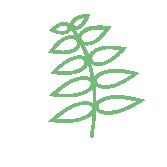 fern by MRFA from the Noun Project